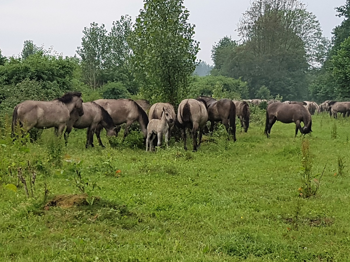 Horsterwold in Flevoland