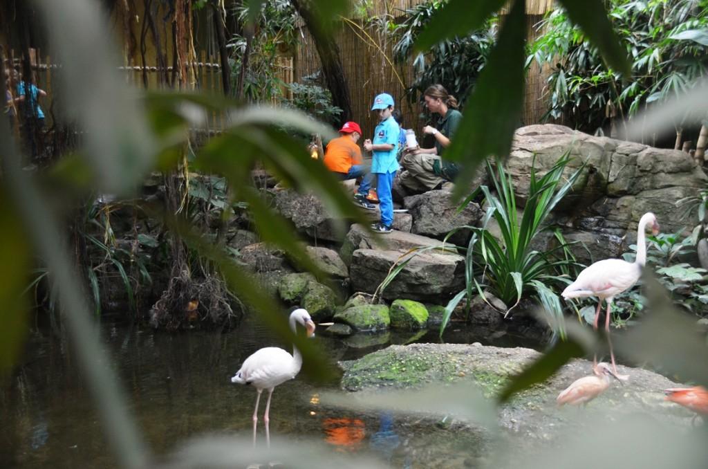 Jungle Dome flamingo's