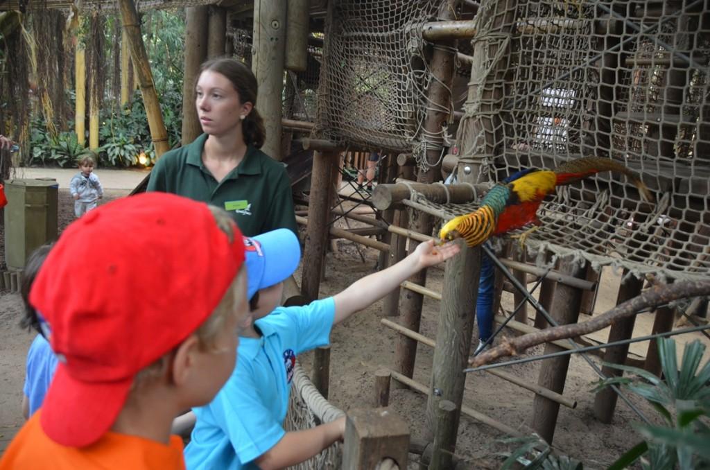Jungle Dome vogel voeren