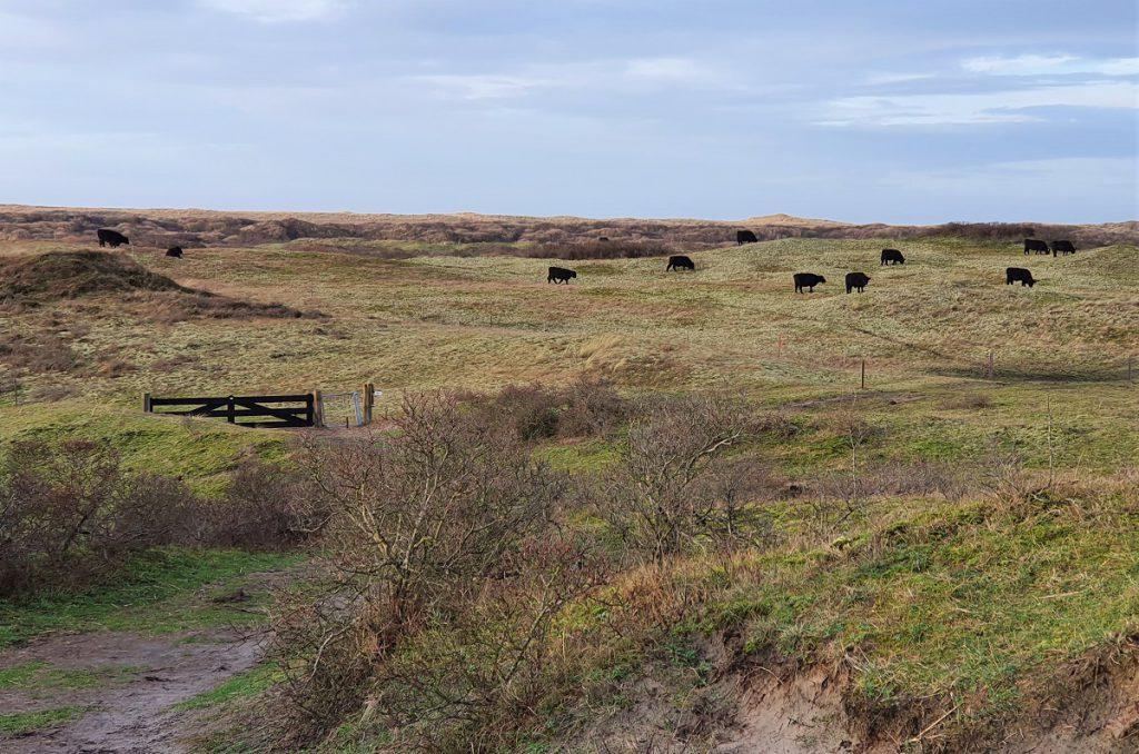 wandelen in De Muy op Texel