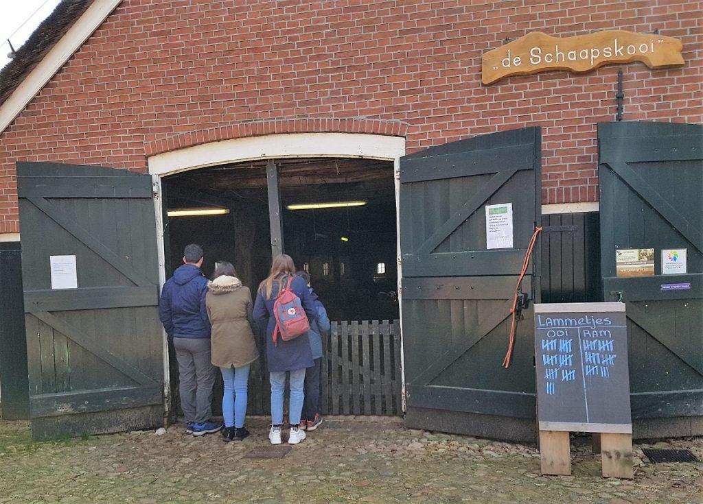 Bezoek aan de schaapskooi in Exloo Drenthe