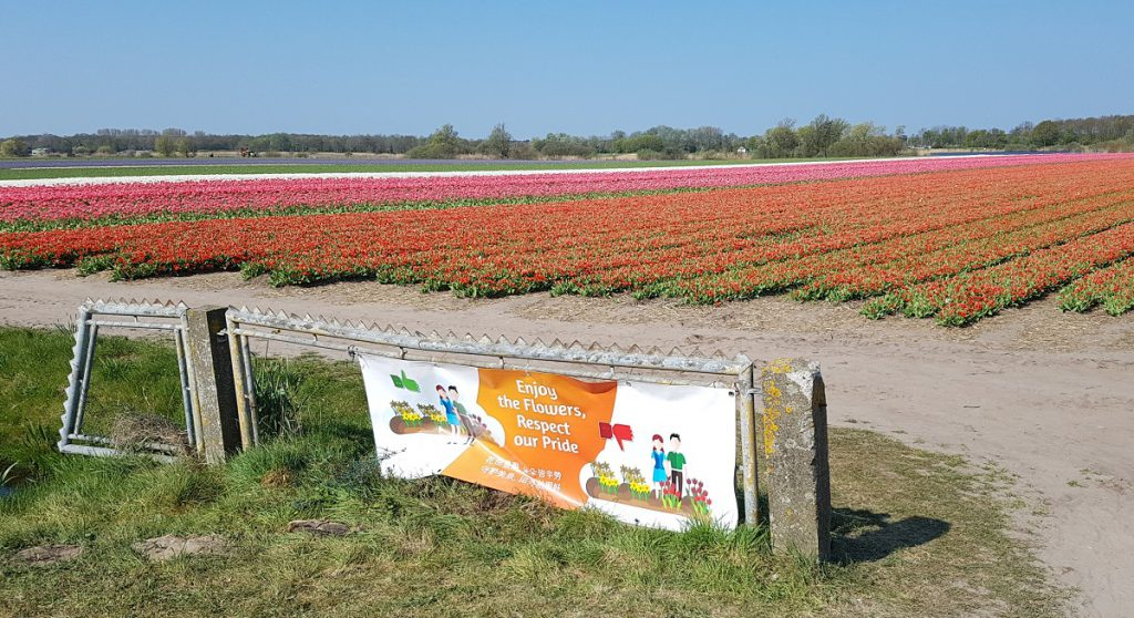 Tulpenvelden niet betreden